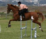 Highlight for Album: Horse Jumping