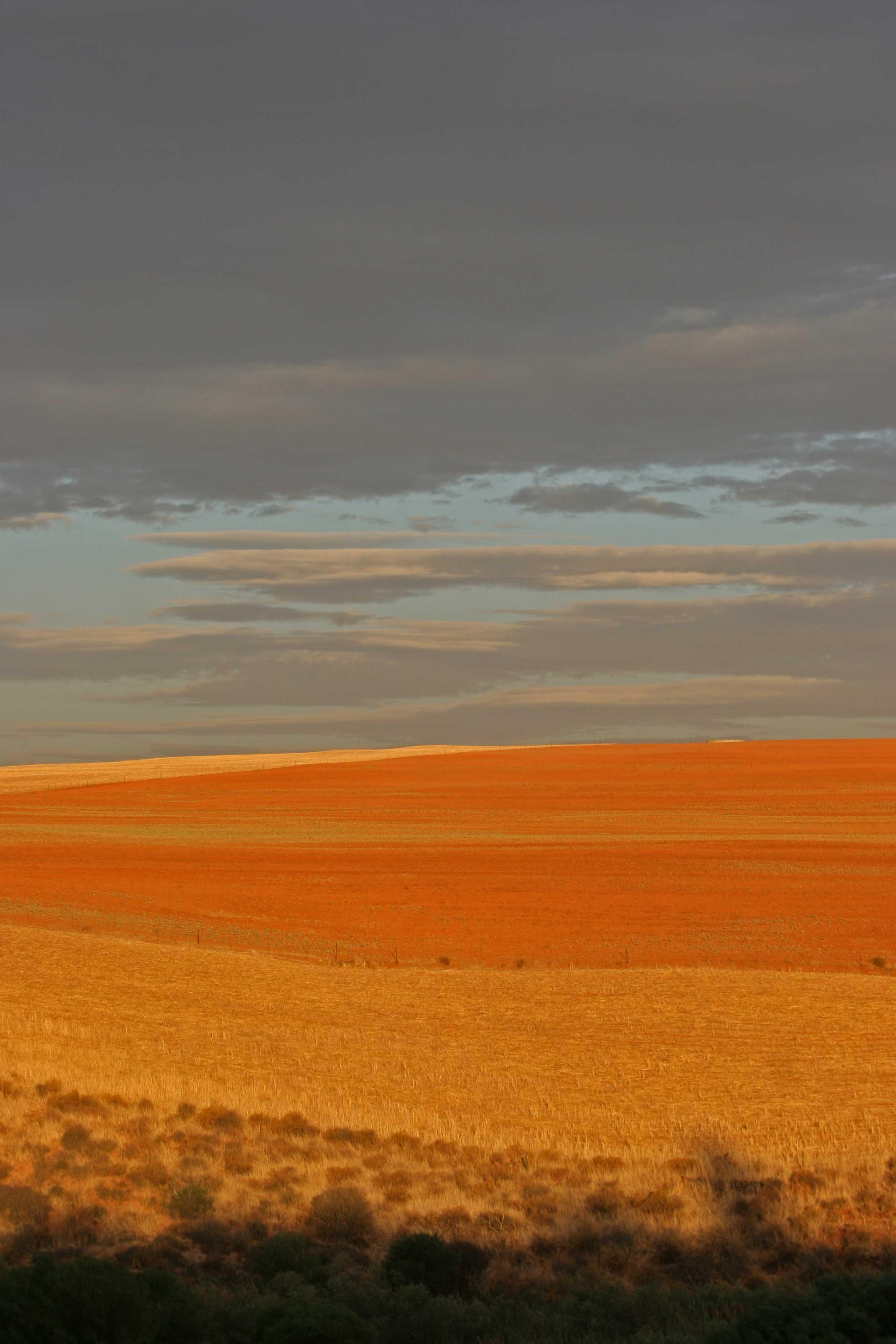 Fields at Misversandt