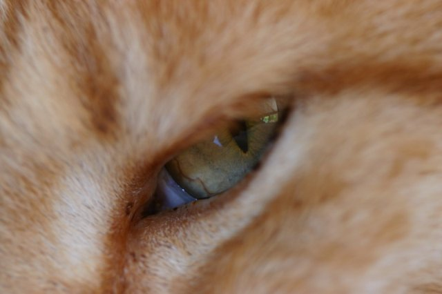 Toshka Eye