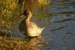 Highlight for Album: Misverstand Birds
