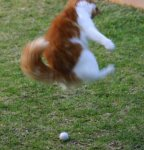 Mishka in motion